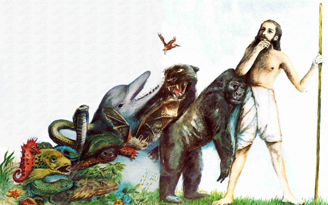 The theory of evolution has only one tiny flaw: No real evidence 4.6 (39)