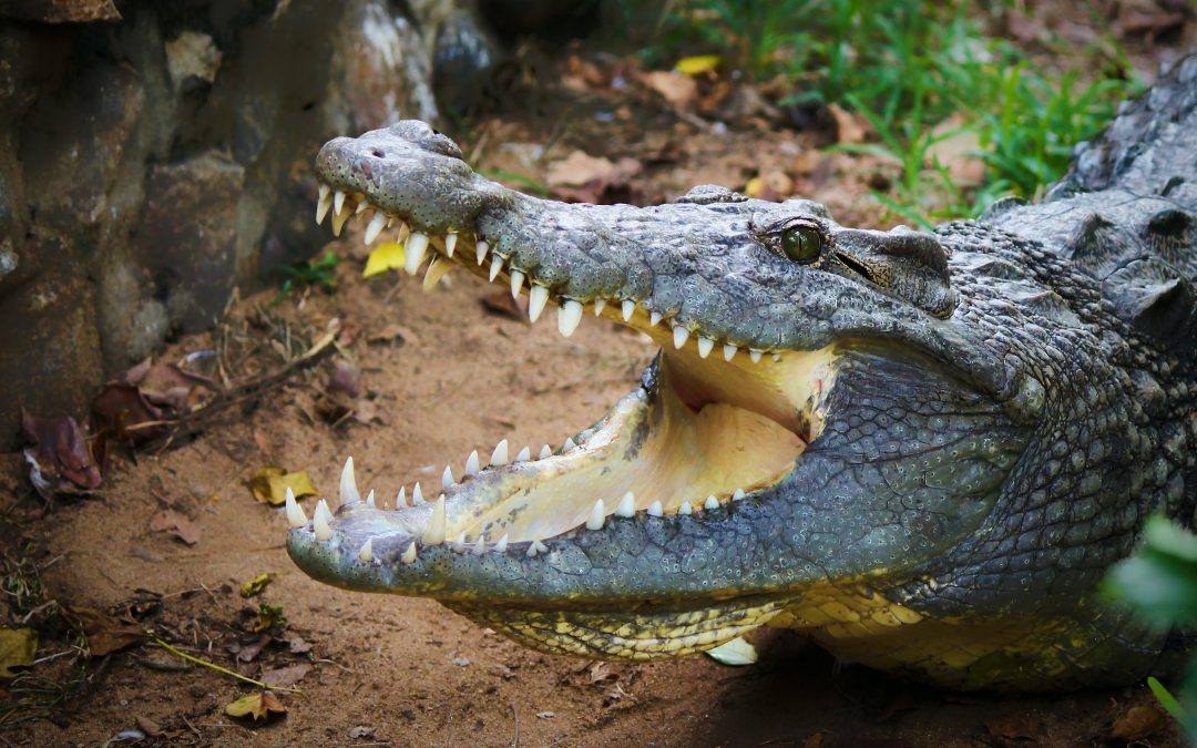Man Jumps into Alligator Tank to Save Zoo Employee – and Wins the Fight! 5 (35)